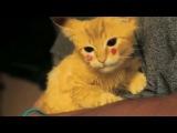 Котёнок Пикачу